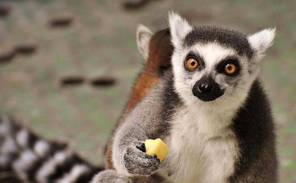 U Rivnomu zoopark zaprovadyv mobiľni vnesky