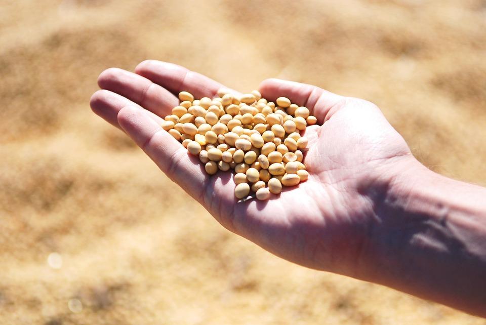 Порт «Південний» матиме соєвий завод на 3 континенти
