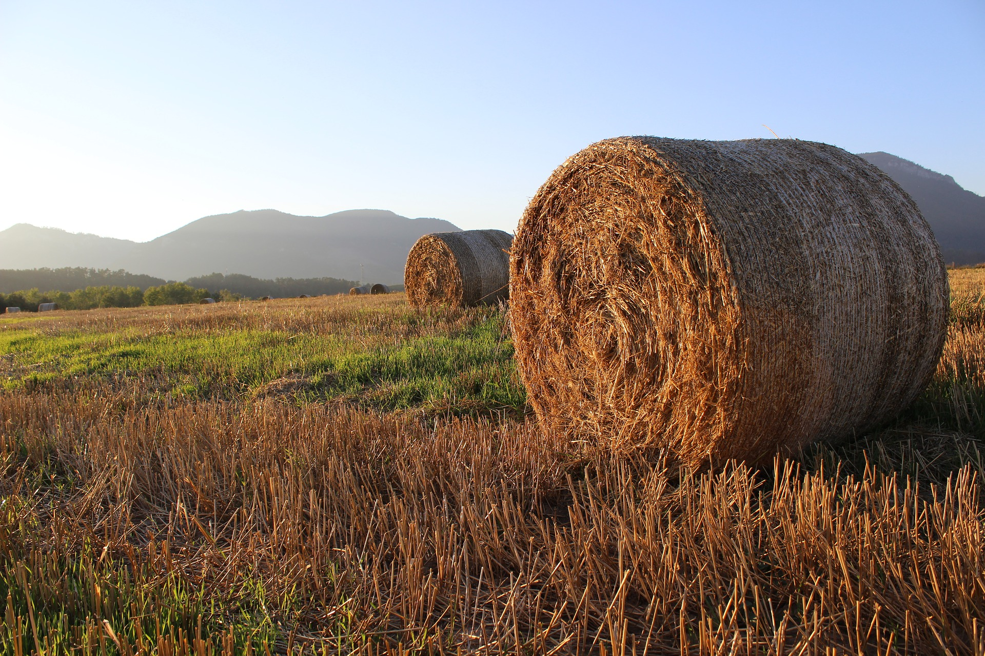 Ukraїnśkyj agroholdyng investuje 4 mln grn u kooperatyvy
