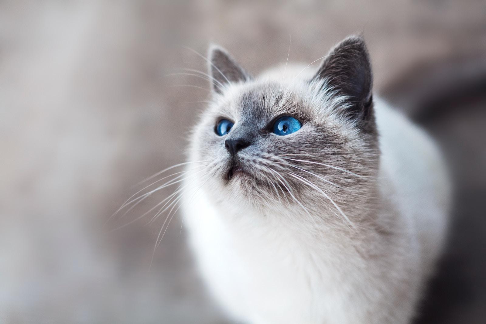 Коти, гроші, 2 «ефіри» — як заробити $2,5 млн за 7 днів