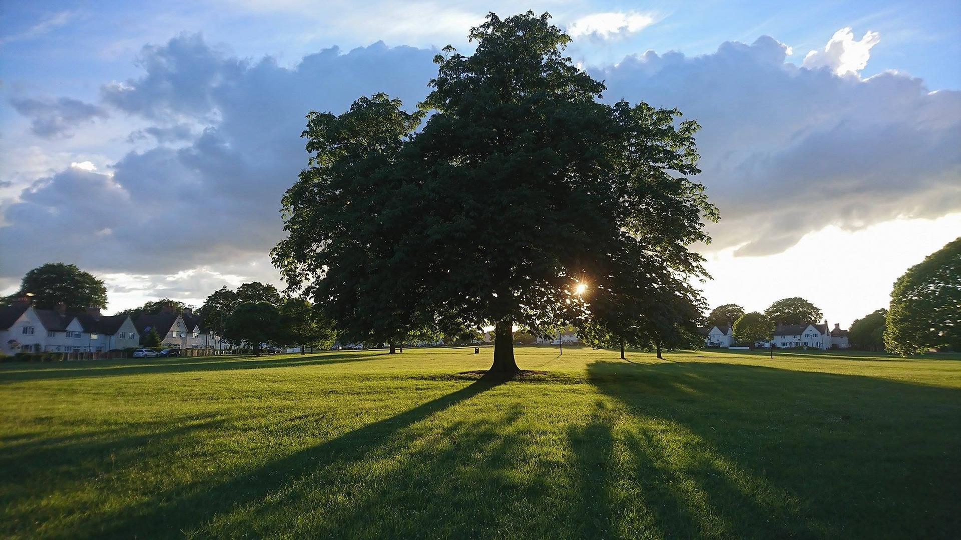 На Черкащині ґаджети заряджатимуть від «сонячного дерева»