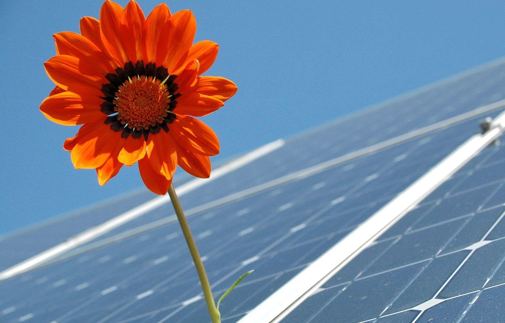 Україна стала повноправним членом агентства із «зеленої» енергетики
