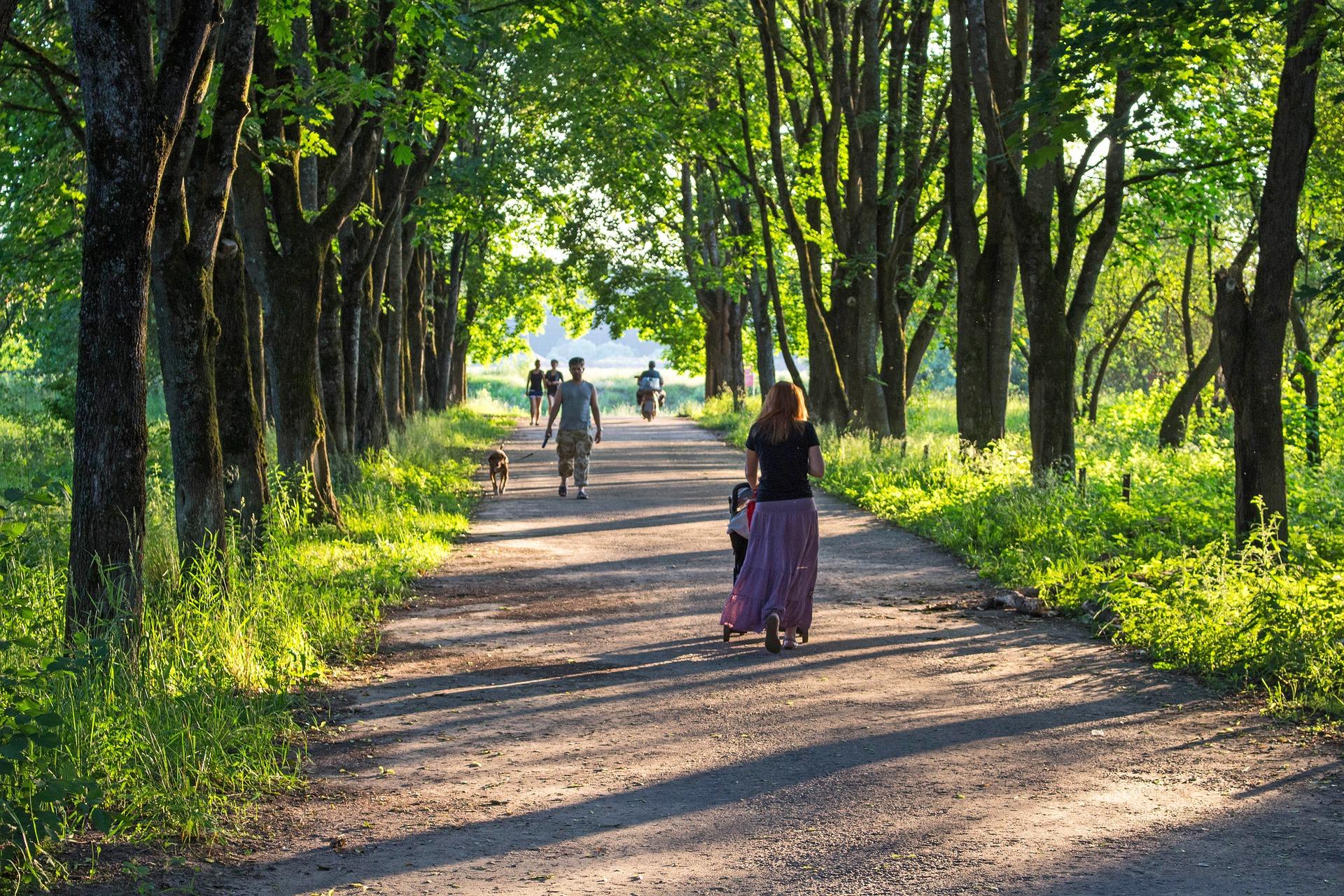 U Svjatošynśkomu lisoparku vysadjať pivmiľjona derev