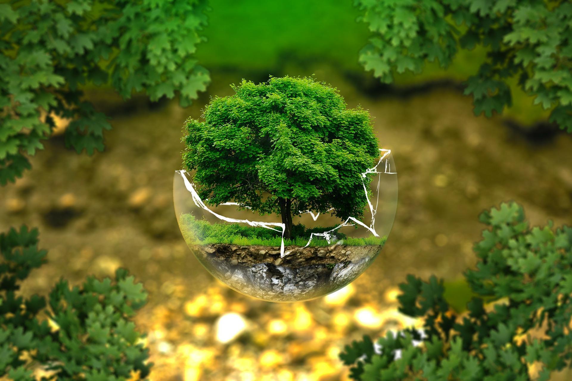 В Україні відкрився «екологічний» онлайн-магазин
