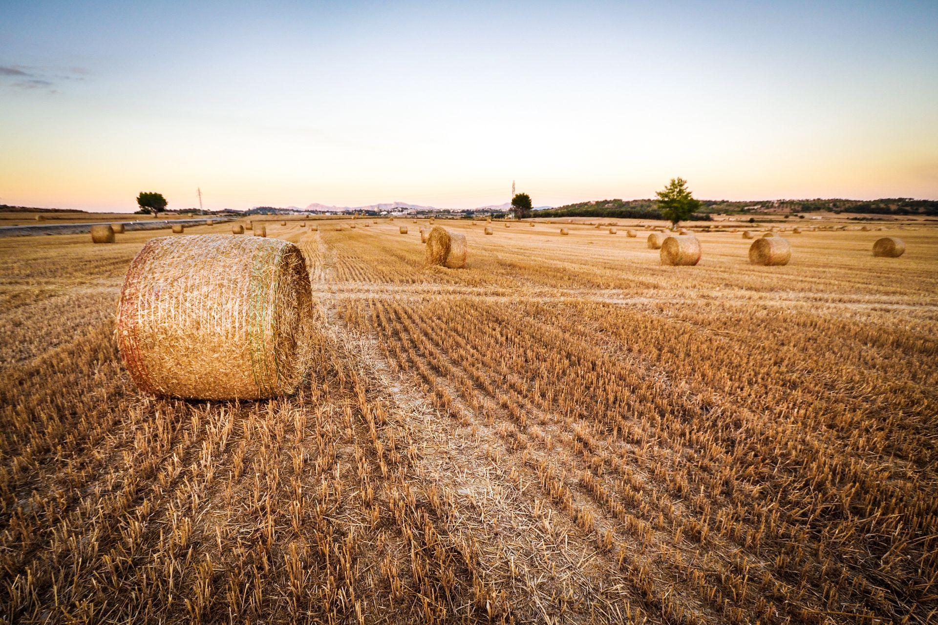 В Україні запускають мобільний додаток для аграріїв