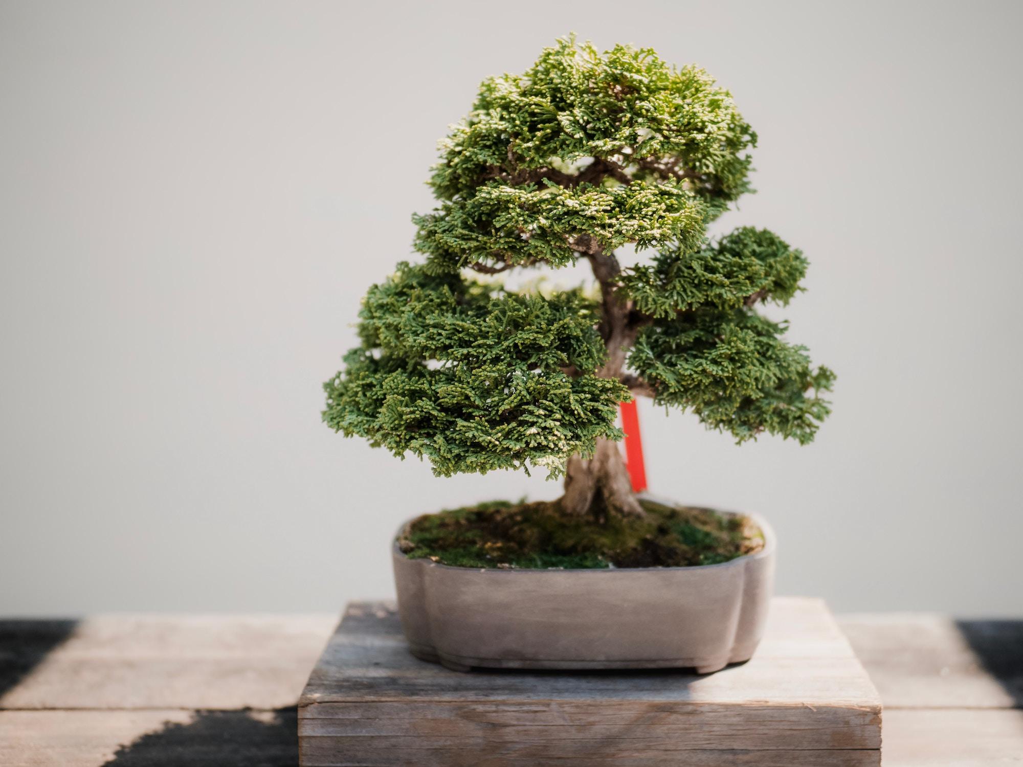 Зелене дерево бізнесу — 17 уроків для менеджера від CEO Rakuten