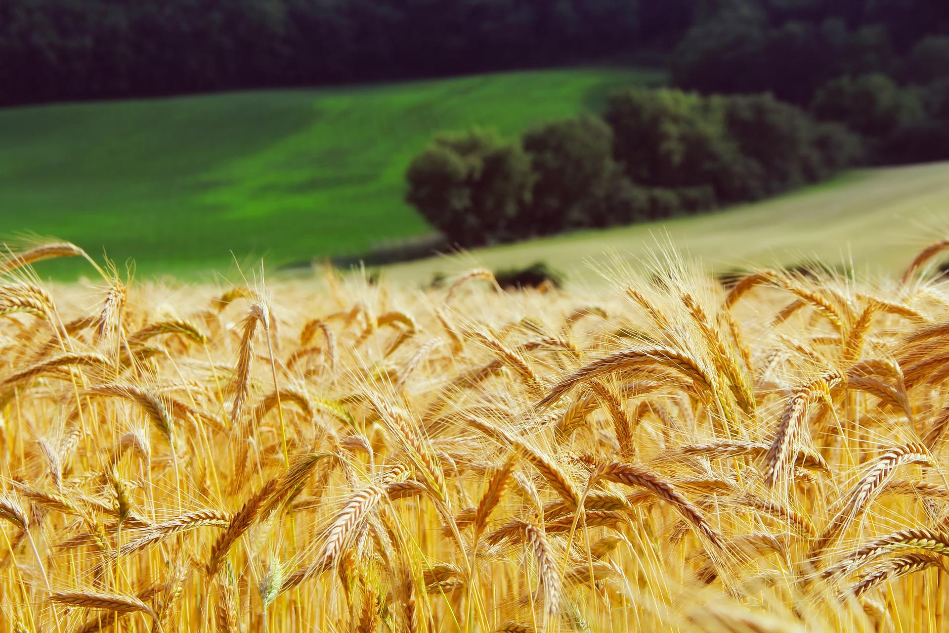 Австралійський зерновий гігант відкрив філію в Україні