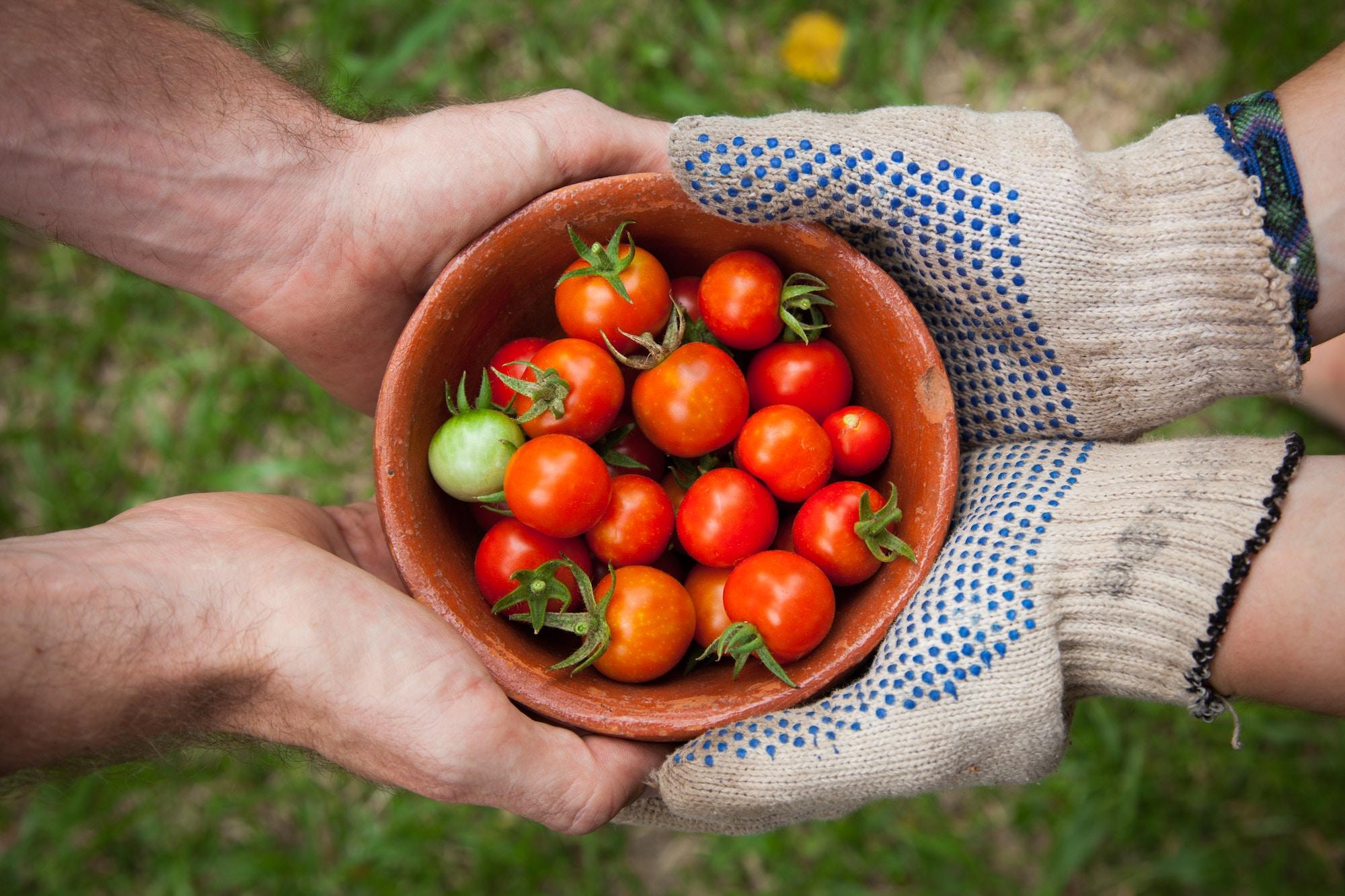 Японці придбали виробника насіння з України для 3,5 тис агрофірм