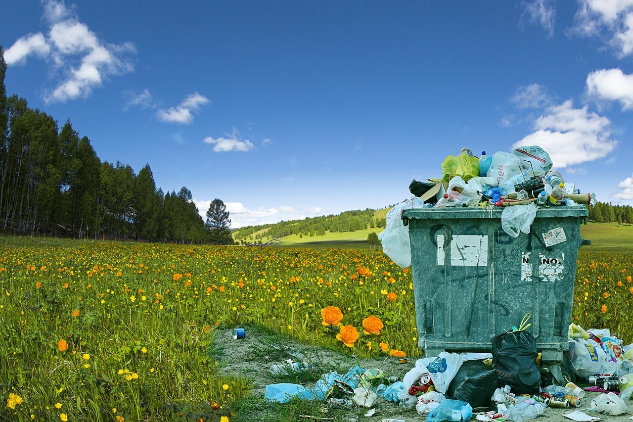 Чому сміття у лісі — це суспільна проблема