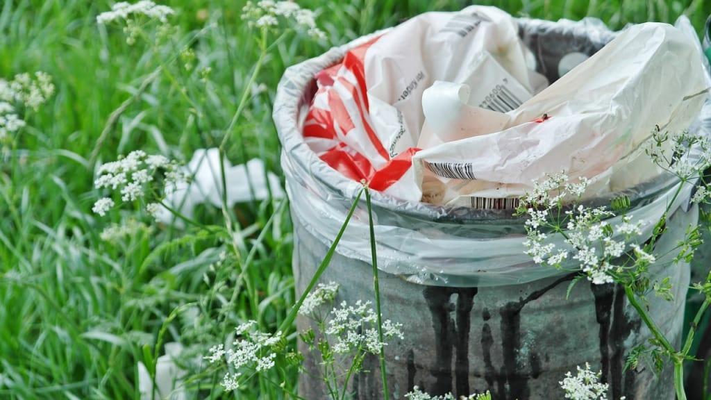 Чому сміття у лісі — це політична проблема