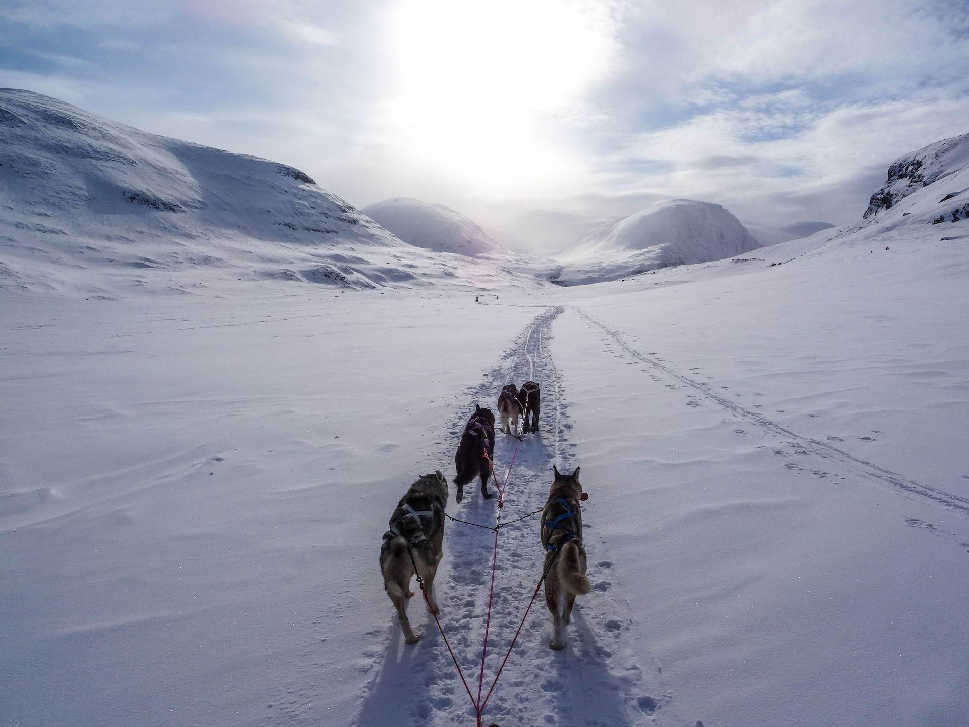 Українців запрошують на конкурс учасників антарктичної експедиції