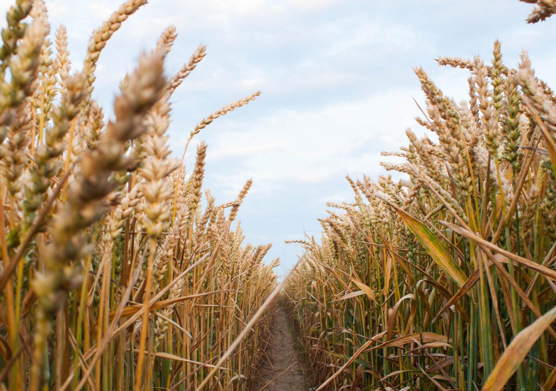 Kompanija z Saudivśkoї Araviї kupuje ukraїnśkyj agroholdyng
