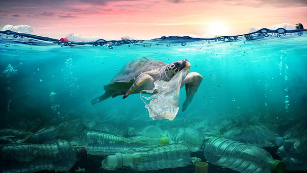 🌍 В Україні проведуть «День без поліетилену» – звільнись від пластику
