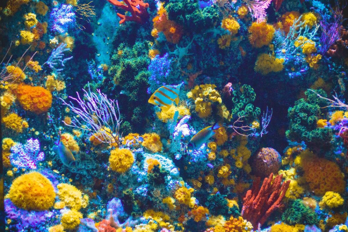🐠 Orb Farm — jakščo vy duže davno hotily sobi akvarium