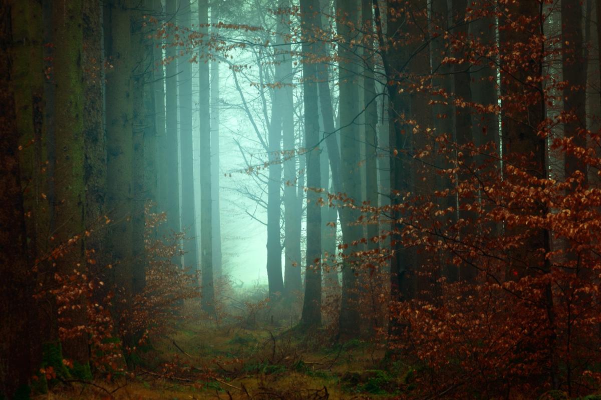 🧝🏻♀️ Вийде п'єса за романом Лесі Українки «Лісова пісня» кримськотатарською мовою