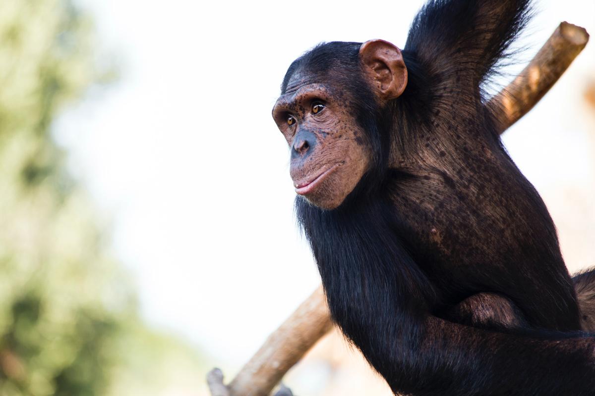 🦍 Вчені (випадково) знайшли новий вид древніх приматів — чому це важливо