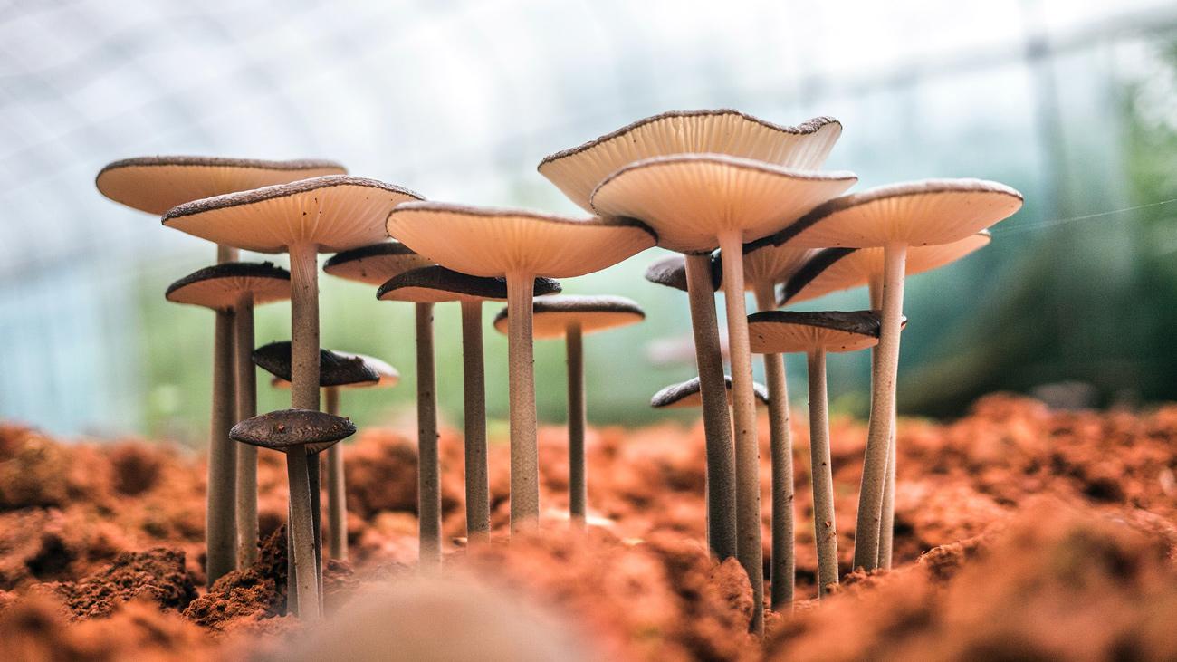 ⚰️ Стартап виробляє домовини із грибів — це супер екологічно