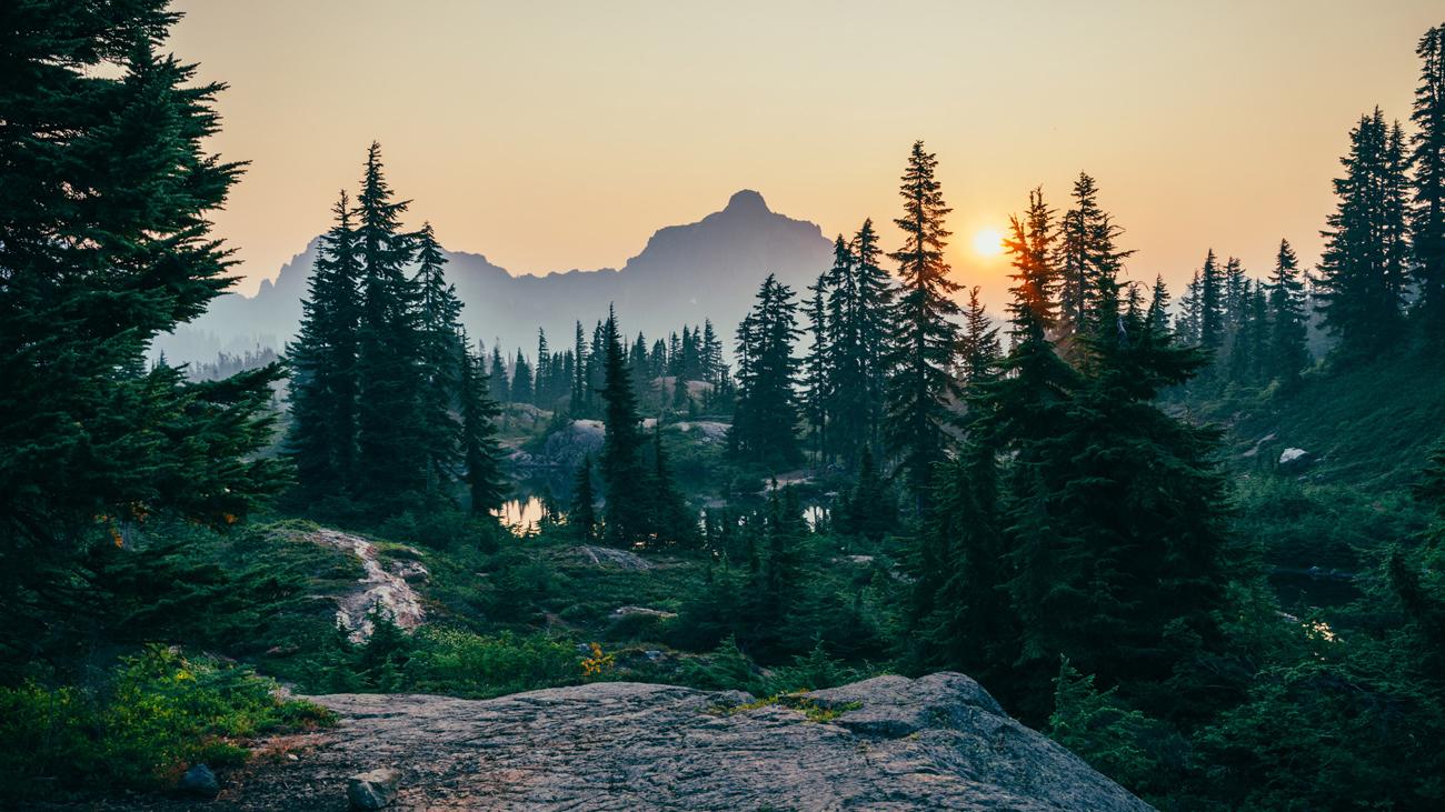 🌲 Sounds of the forest: вийшов сайт зі звуками лісів всього світу — якщо ви сумуєте за природою