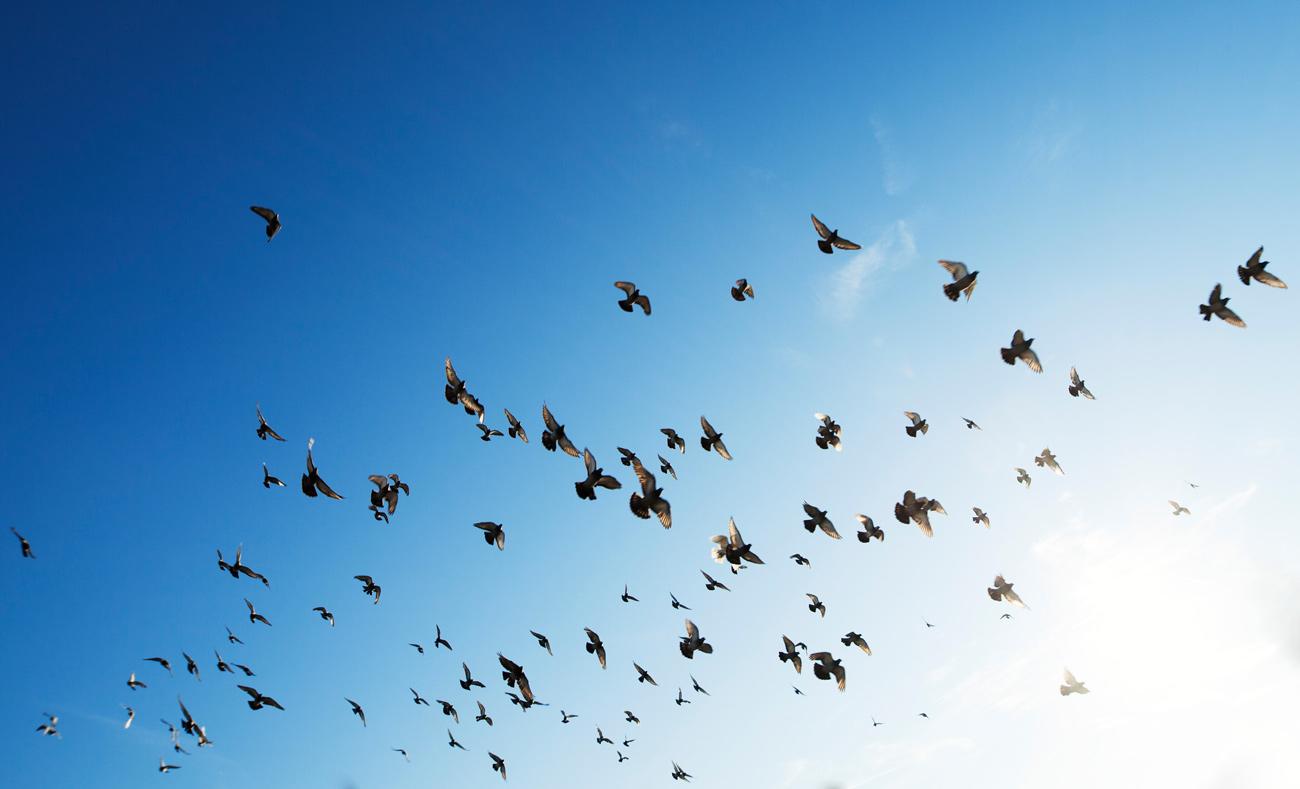 🐦 BirdBox: Розробник навчив пташок збирати сміття за винагороду — а ваш папуга так вміє?