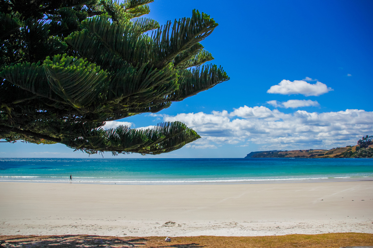 ♻️ Tasmanija stala ostrovom, ščo povnistju zabezpečyv sebe vidnovljuvaľnoju energijeju