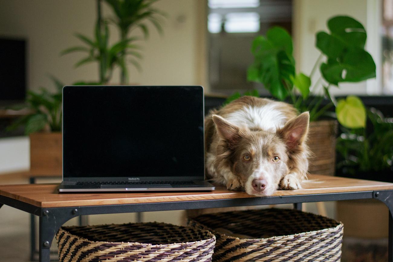 🐶 Український PetTech: 6 стартапів для власників тварин