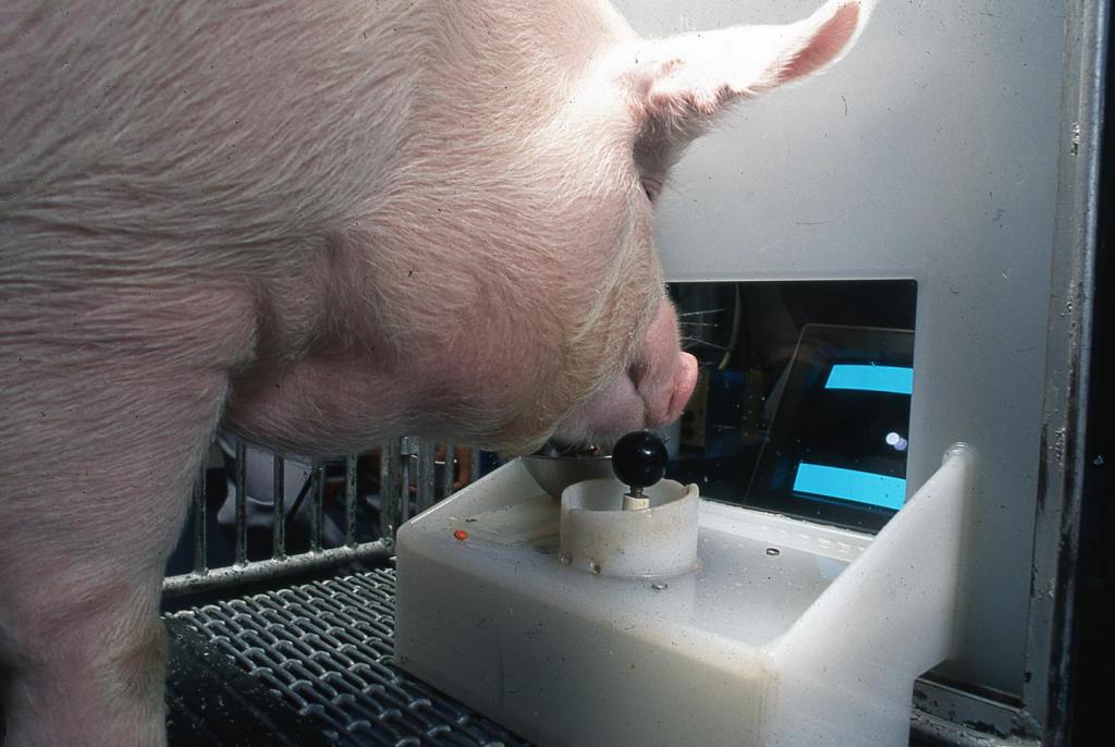 Свині та відеоігри