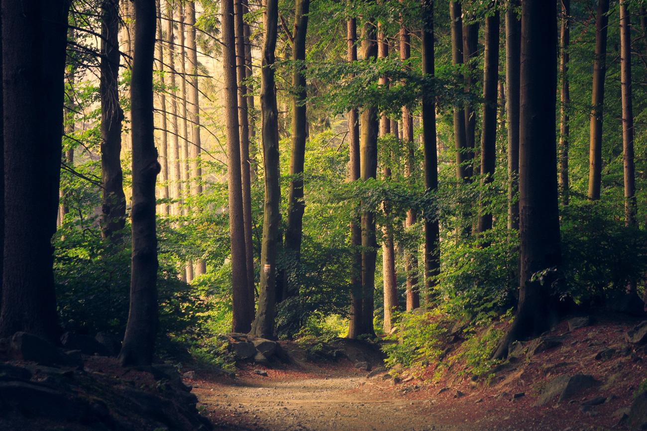 🌳 Save Eco Bot: в Україні створили бота за допомогою якого можна поскаржитись про незаконну вирубку лісів