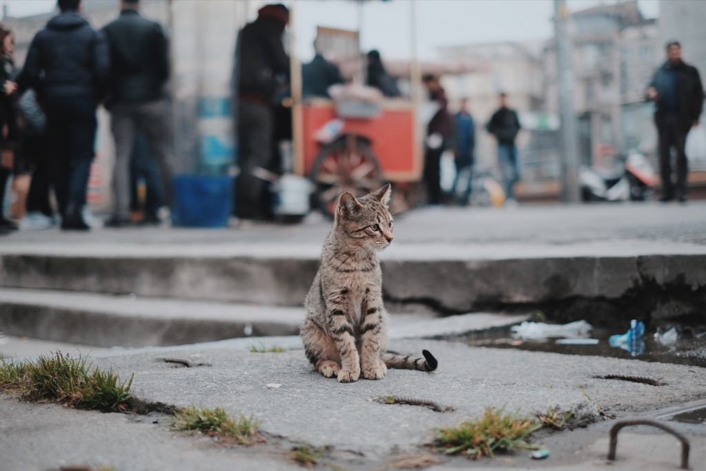 Koty — častyna mista