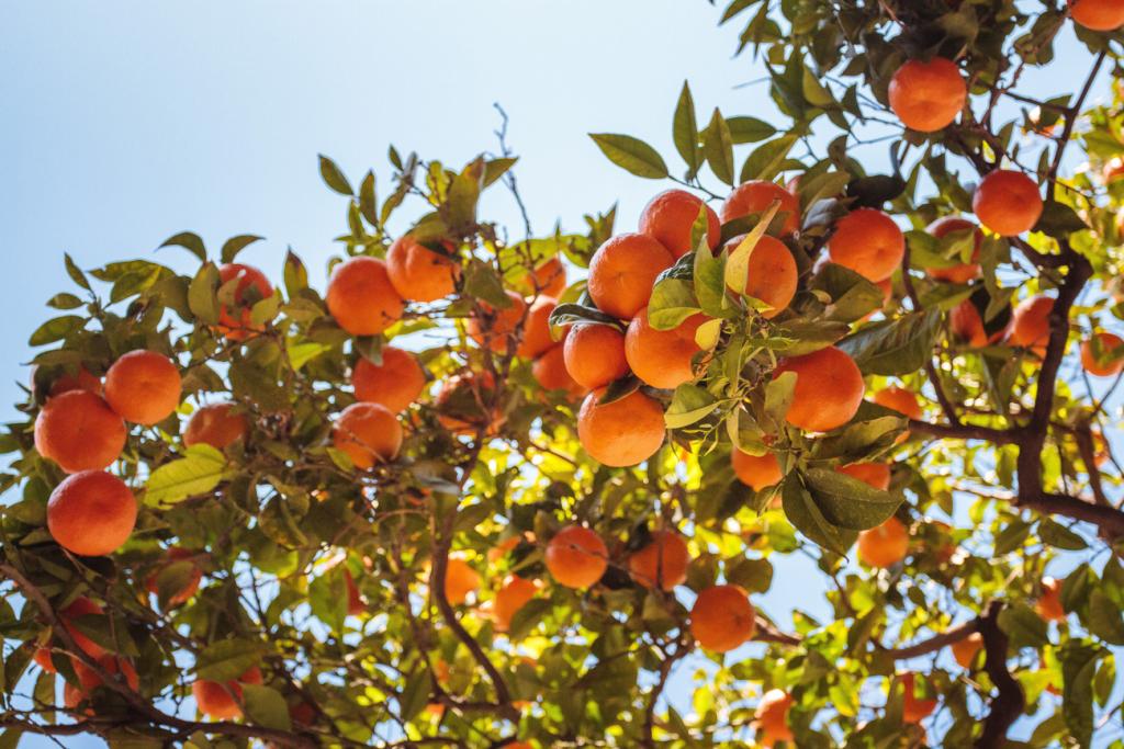 Апельсини — джерело енергії