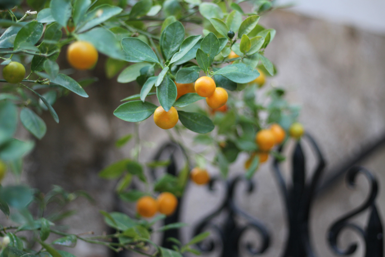 🍊 У Іспанії використовуватимуть апельсини як джерело зеленої енергії