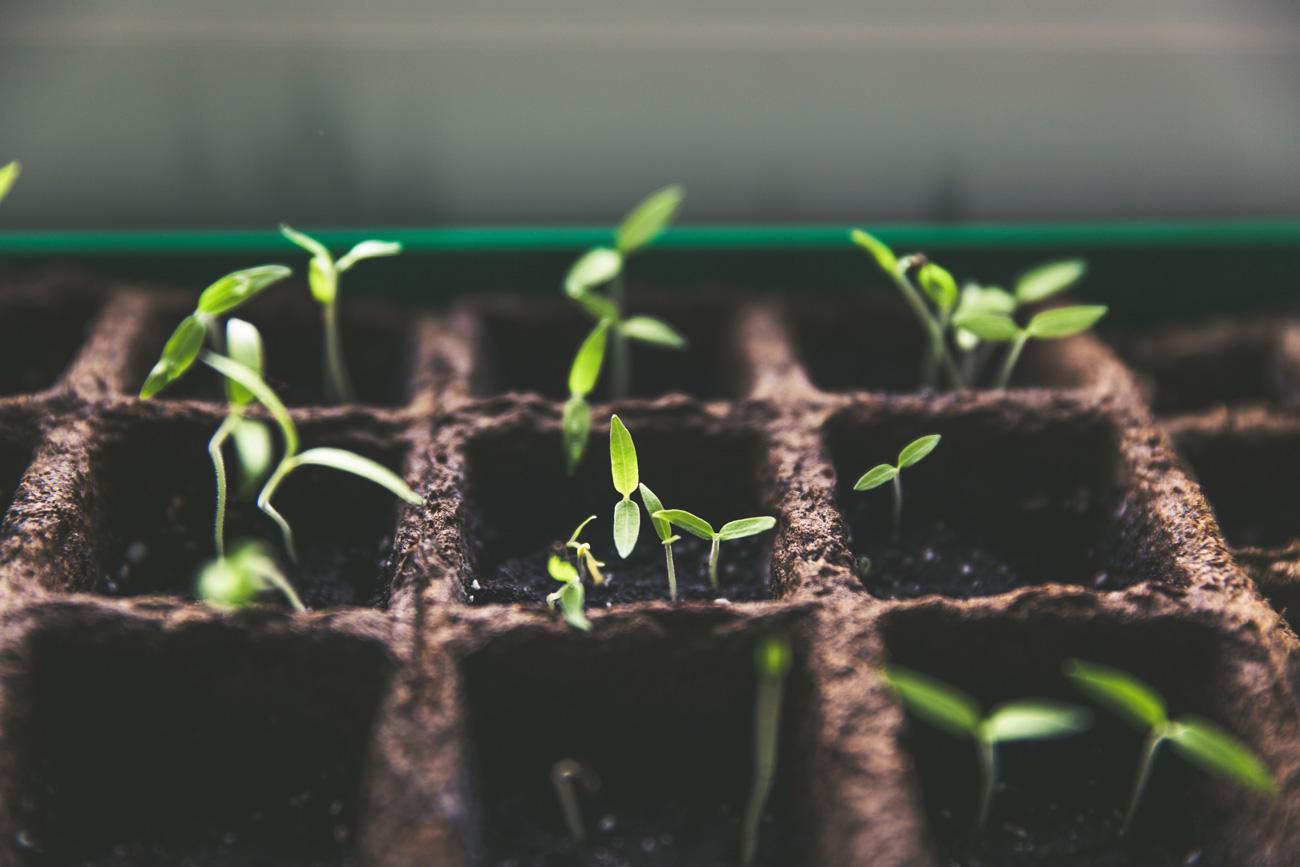  Науковці винайшли рослини, які світяться, якщо їм потрібна допомога