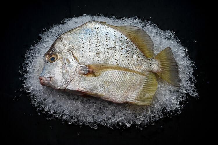 Jak reguljarne vžyvannja ryby vplyvaje na organizm?