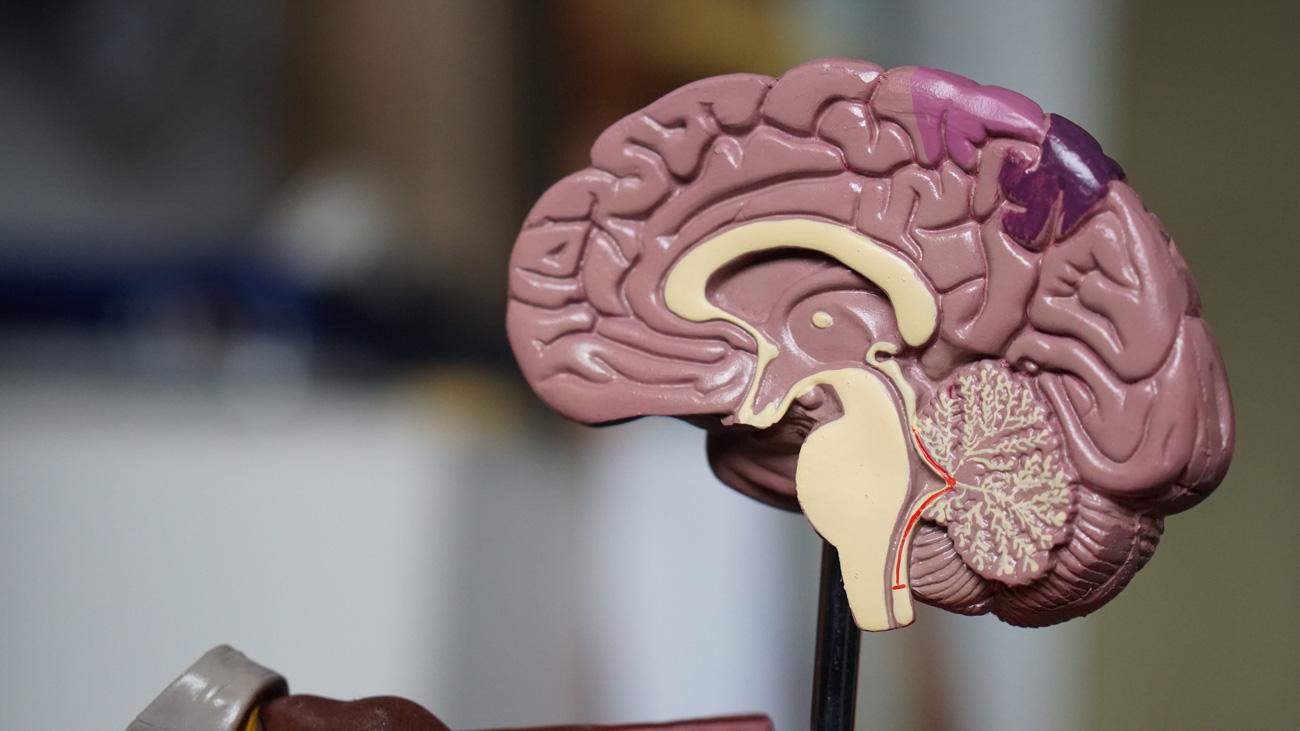 🧠 Вчені під'єднали людський мозок до комп'ютера через бездротову мережу — вперше в історії