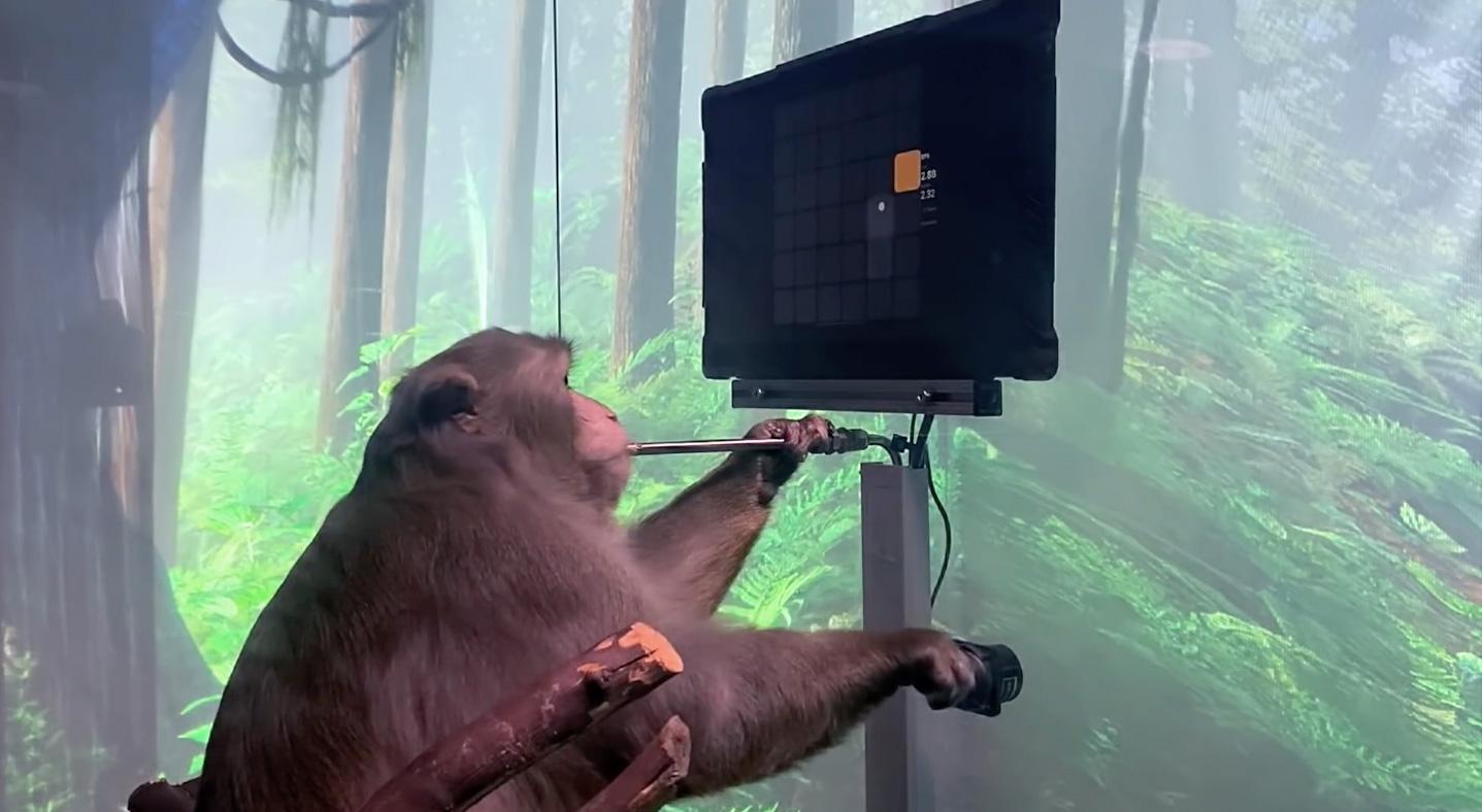 🐒 Neuralink показала мавпу, яка грає в пінг-понг на ПК силою думки: відео
